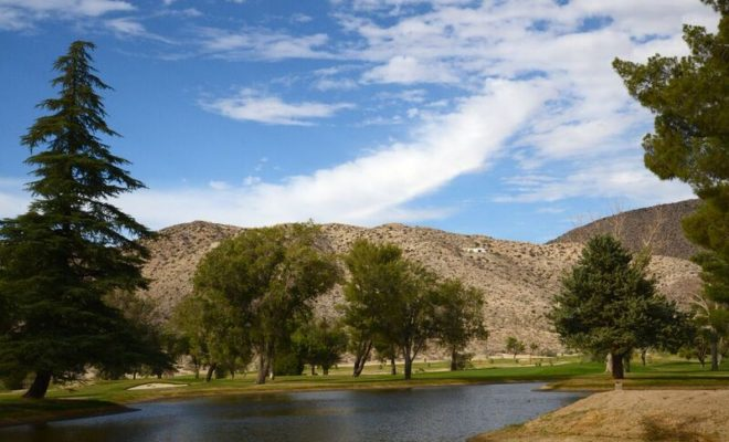 Back to the Basics Fun-Yucca Valley